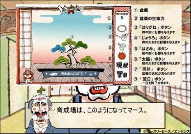 bonsai003.jpg