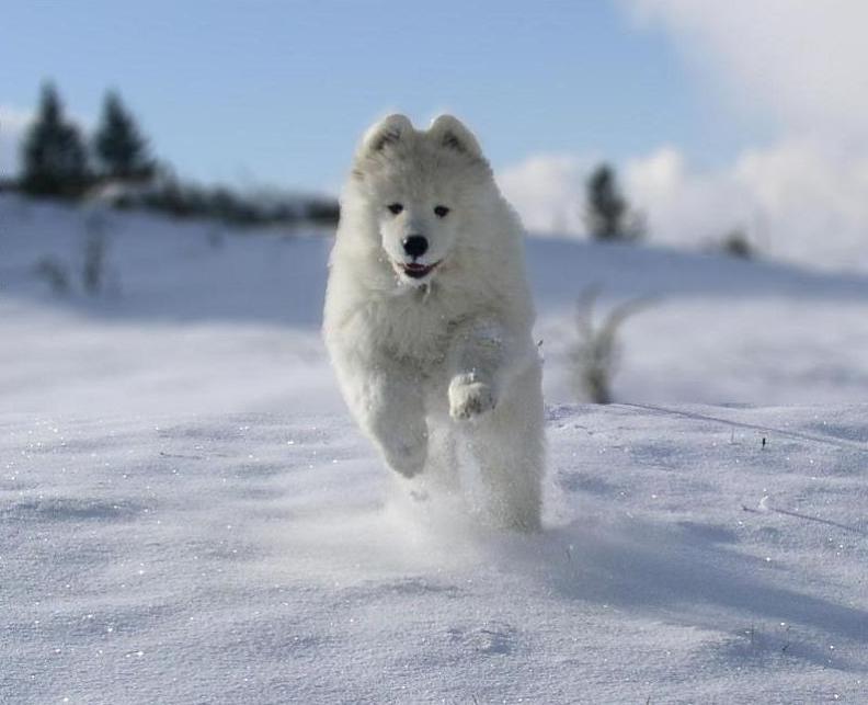 dog_ran.jpg