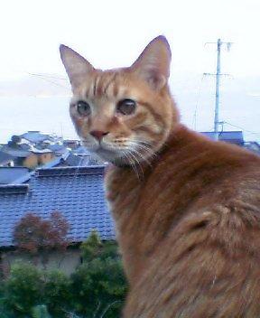 ten_chan.jpg